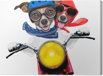 motorbike couple of dogs Canvas Print