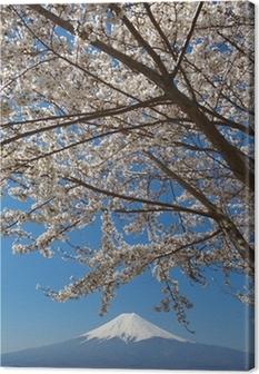 Mountain fuji and cherry blossom sakura Canvas Print