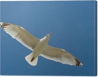 Möwe im Flug Canvas Print