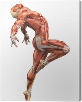 muscle man side ballet view Canvas Print