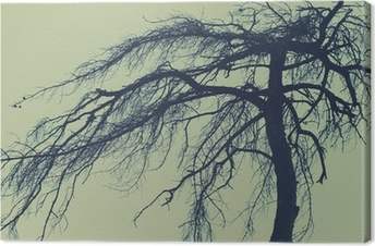 Mysterious tree, scary forest Canvas Print