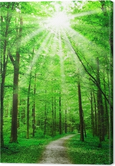 nature. path in forest with sunshine Canvas Print