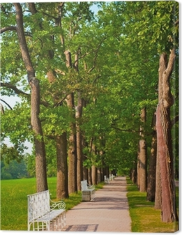 number of benches in the summer park Canvas Print