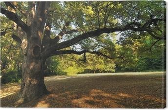 Oak Tree in Park Canvas Print