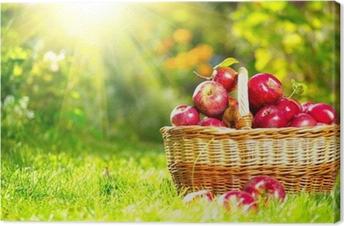 Organic Apples in a Basket outdoor. Orchard. Autumn Garden Canvas Print