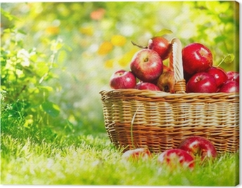 Organic Apples in a Basket Outdoor Canvas Print