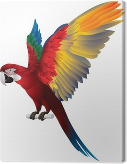 Parrot Spread Wings Canvas Print
