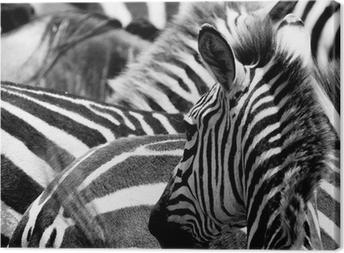 pattern of zebras Canvas Print