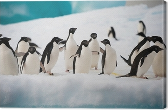 Penguins on the snow Canvas Print