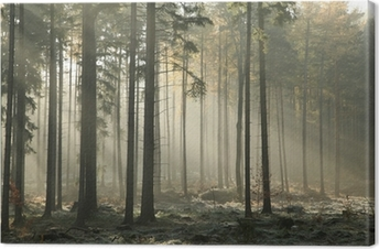 Picturesque autumnal forest on a foggy November morning Canvas Print