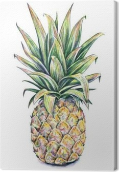 Pineapple on a white background. Watercolor illustration Canvas Print