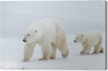 Polar bear mom and cub walking on the ice Canvas Print