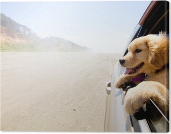 Puppy looking out the window of a car Canvas Print