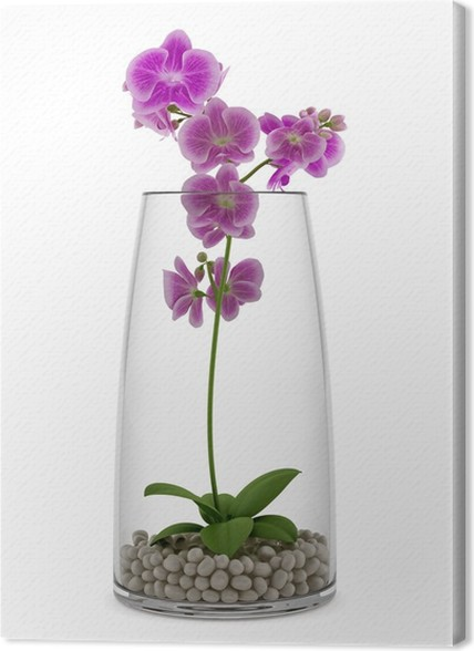 Purple Orchid Flower In Glass Vase Isolated On White Background