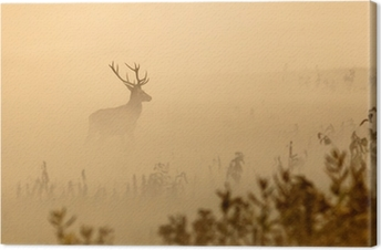 Red deer with big antlers stands on meadow on foggy morning Canvas Print