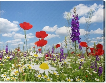red poppy and wild flowers Canvas Print