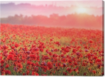 Red poppy field in the morning mist Canvas Print
