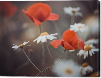 red poppy flowers and wild daisies Canvas Print