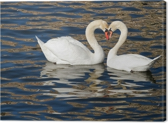Romantic swans in spring. Canvas Print