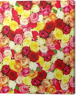 roses. colorful flowers wallpaper Canvas Print