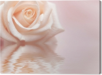Rosy Rose Canvas Print