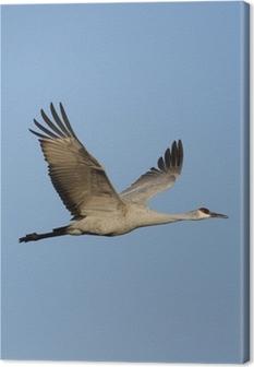 Sandhill crane, Grus canadensis Canvas Print