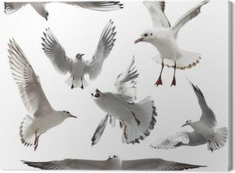 Seagulls Isolated Canvas Print