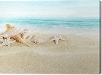 Shells on sandy beach Canvas Print