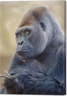 Silverback gorilla. Canvas Print