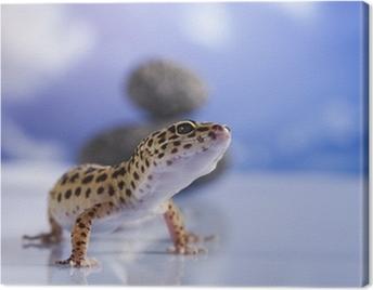 Small gecko reptile lizard Canvas Print