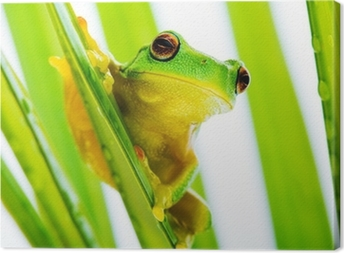 Small green tree frog holding on palm tree Canvas Print
