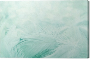 Soft fluffy feathers Canvas Print
