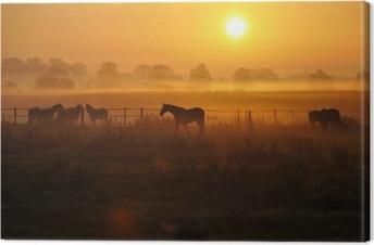 Sonnenaufgang auf einer Pferdeweide Canvas Print