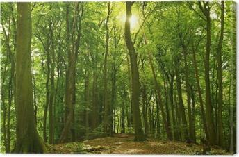 Sonniger Sommerwald Canvas Print