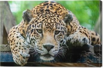 South American jaguar Canvas Print