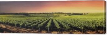 Stunning Sunset Vines Canvas Print