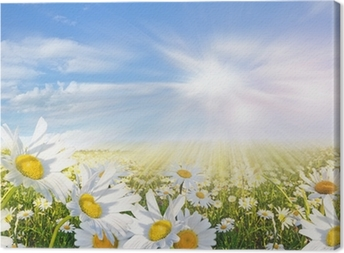 Summer: Field of daisy flowers with blue sky and clouds Canvas Print