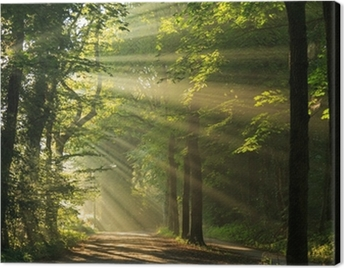 Sun rays shining through the forest Canvas Print