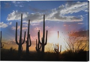 Sun set and Saguaro cactus in Saguaro national park Canvas Print