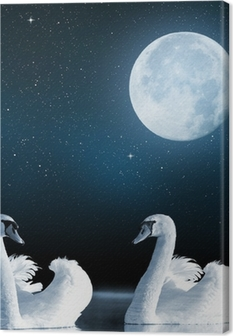 Swans on the lake in the night sky. Canvas Print