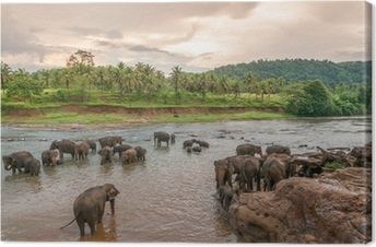 Swimmong Elephants Canvas Print