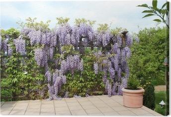 Terrasse mit Blauregen Canvas Print