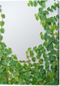 The Green Creeper Plant on the wall for background. Canvas Print