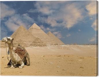 the pyramids camel Canvas Print