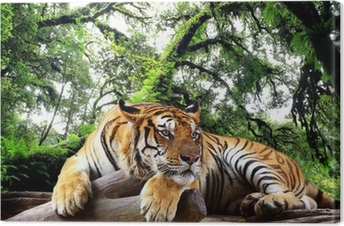 Tiger looking something on the rock in tropical evergreen forest Canvas Print