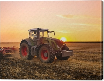 Tractor on the barley field by sunset. Canvas Print
