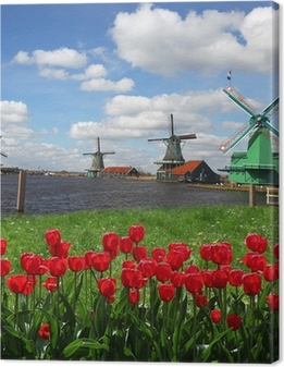 Traditional Dutch windmills with red tulips,Amsterdam, Holland Canvas Print