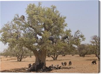 Tree Climbing Goats of Morocco Canvas Print