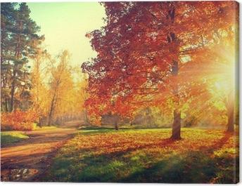Trees in the autumn sun light Canvas Print