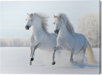 Two white horses gallop in the snow Canvas Print